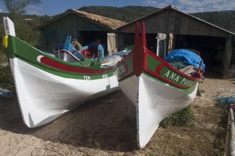 Melhor safra da pesca Artesanal da Tainha dos últimos tempos não é pôr acaso.