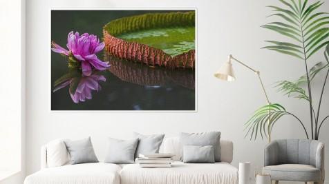Lotus a Flôr